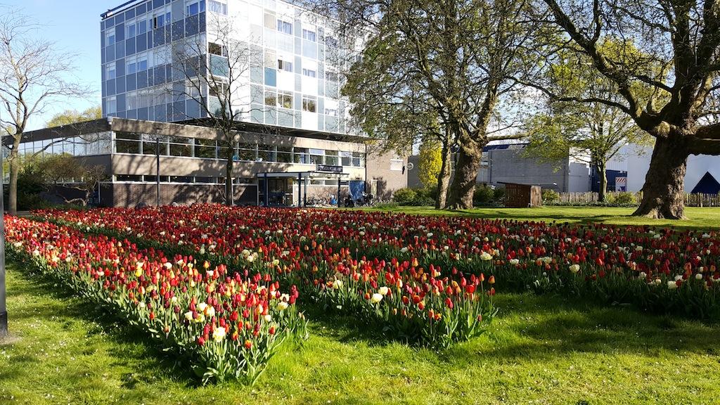 Voorwerf, tulpen, Marineterrein Amsterdam, foto: Maarten Pedroli