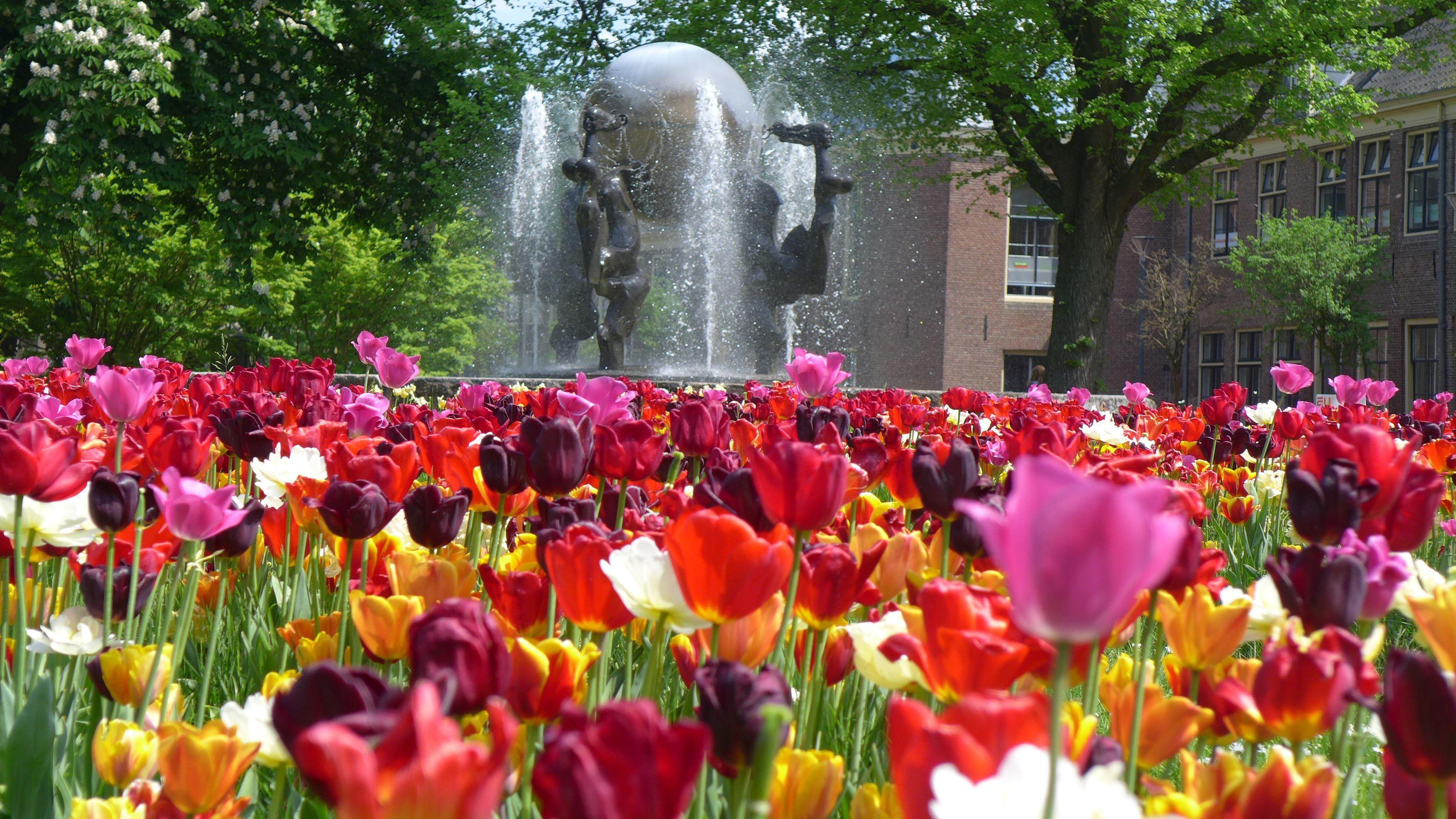 MTA Voorwerf fontein